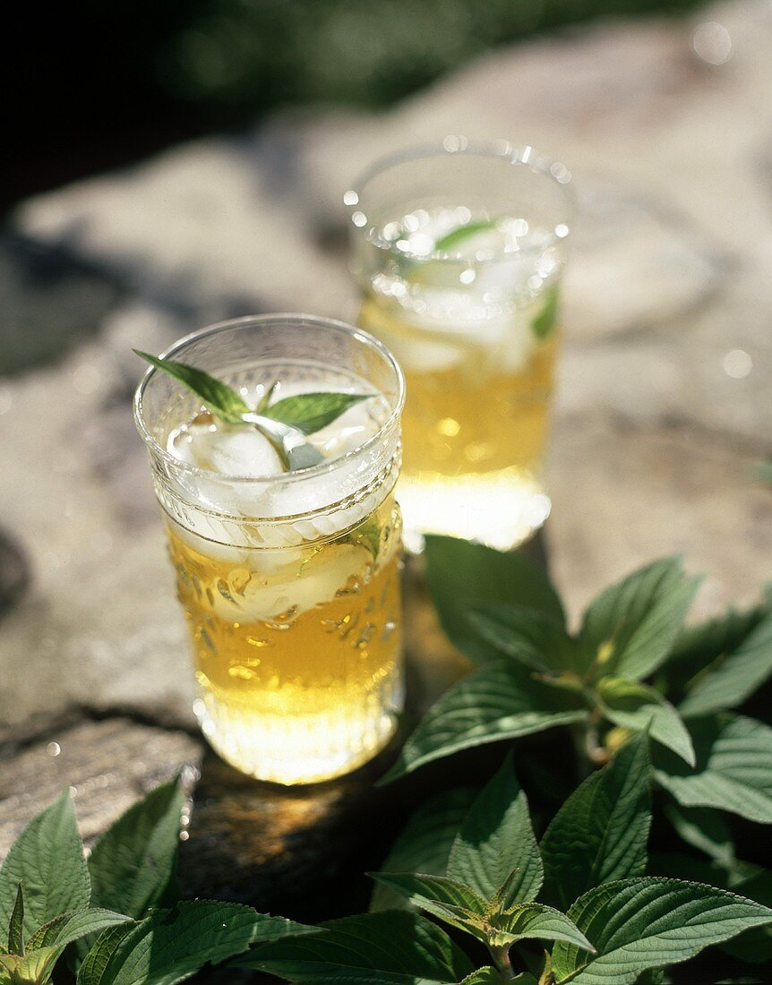 Peppermint tea with ice cubes and fresh mint