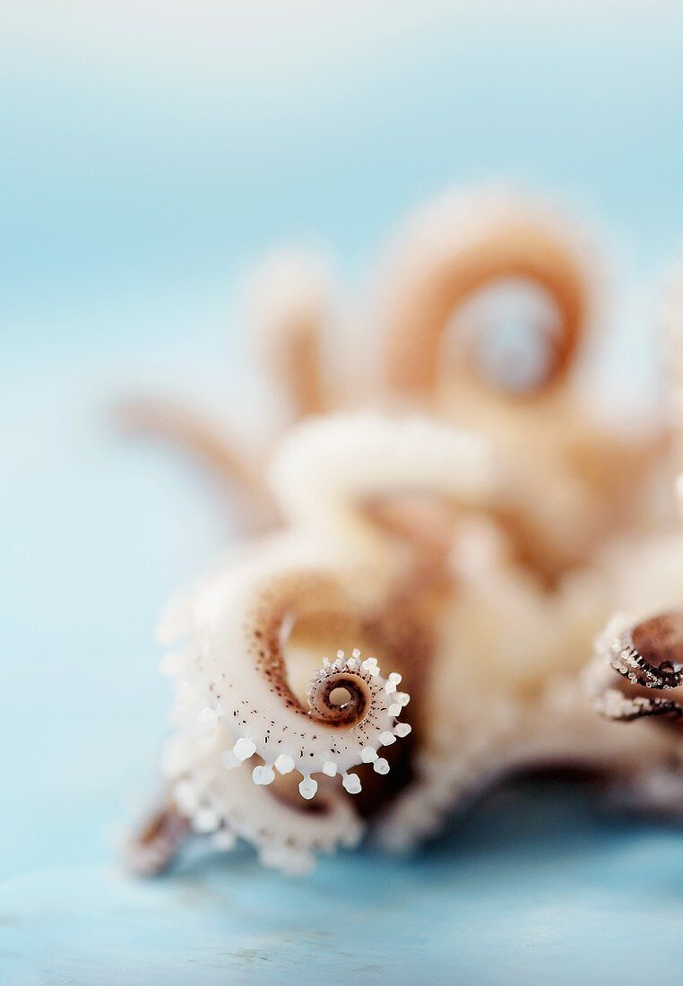 Close Up of Baby Squid