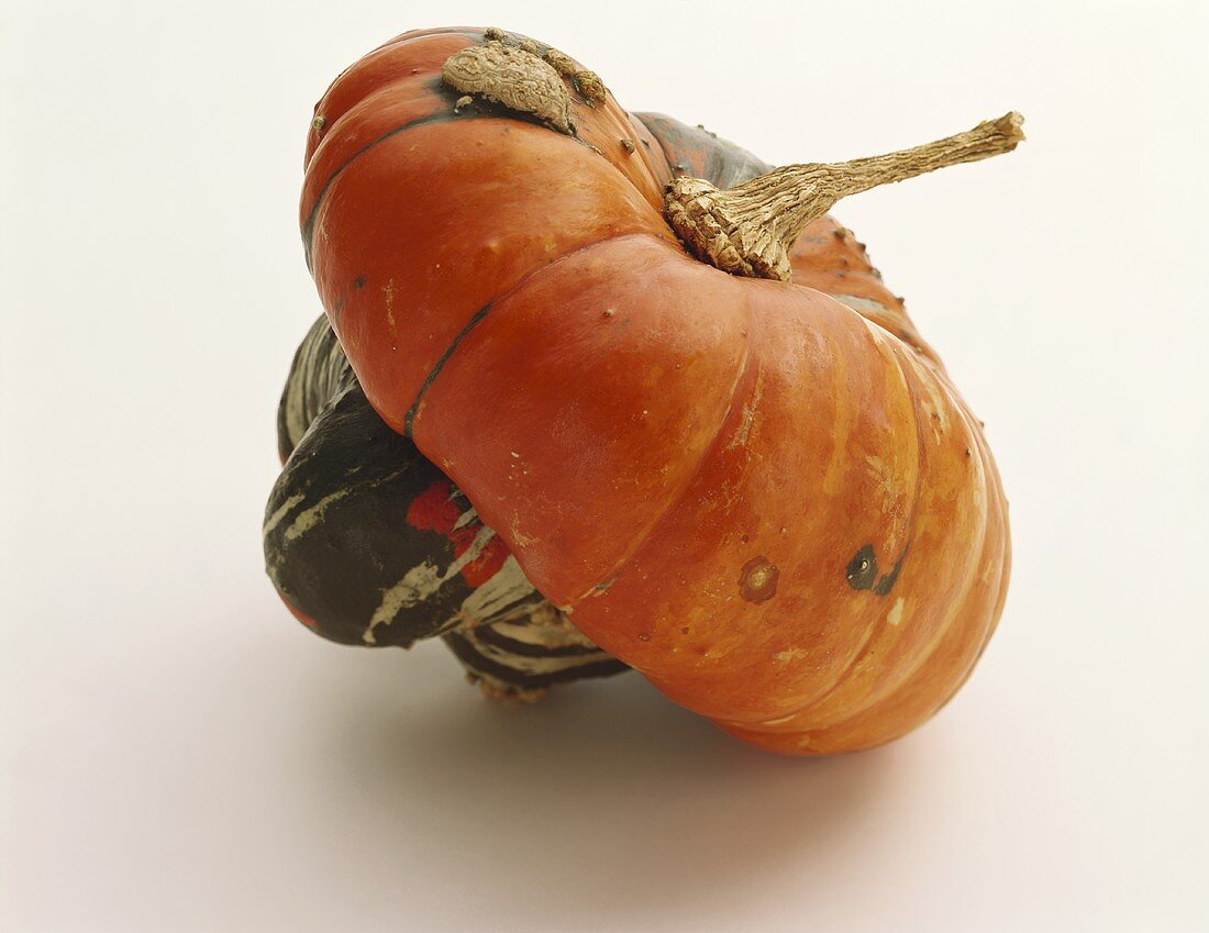 One Turban Squash, Close Up