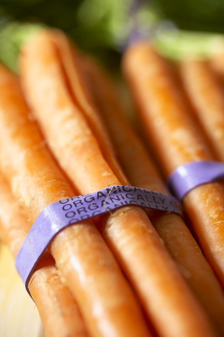 Bundles of Organic Carrots
