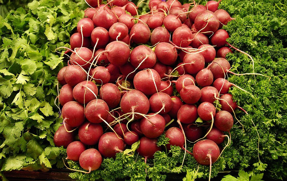 Red radishes, cilantro and curly parsley at a market