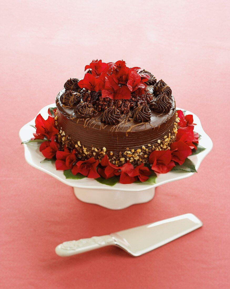 Chocolate Walnut Cake with Server
