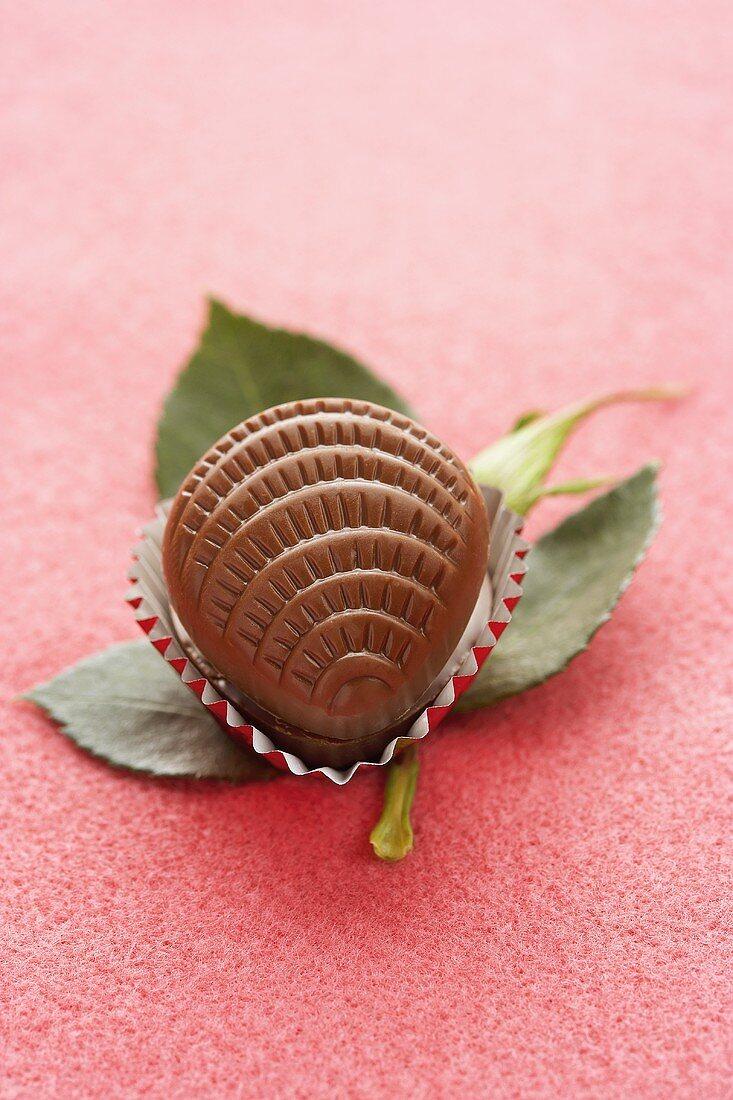 A Chocolate Shaped Like a Shell