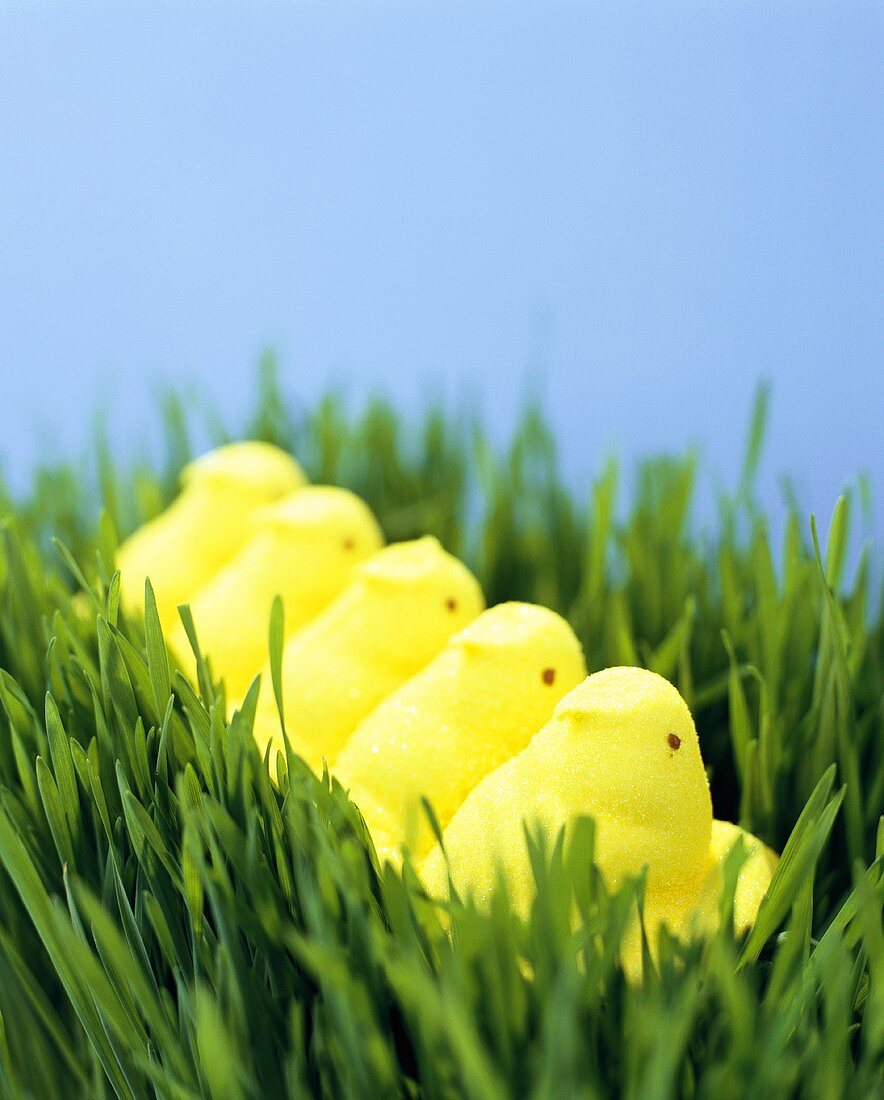 Yellow Peeps in the Grass