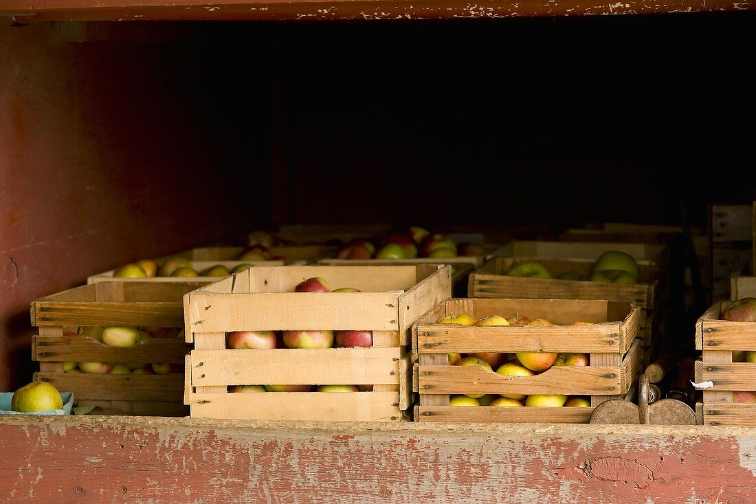 Crates of Apples in a Truck
