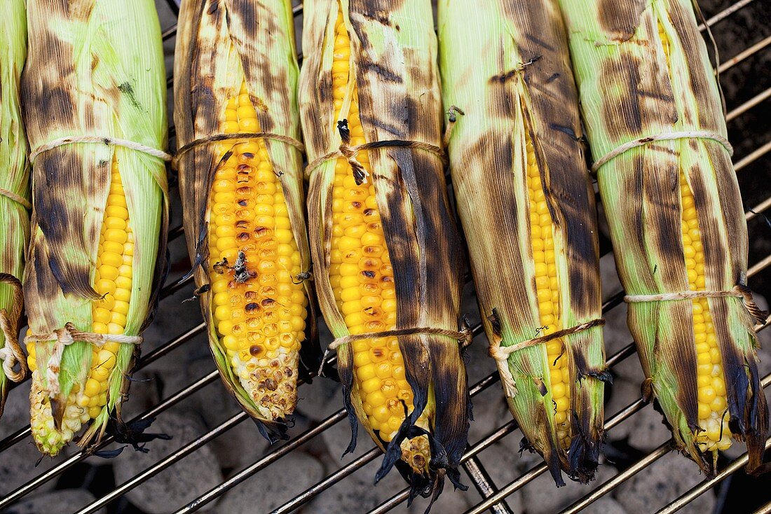 Corn on the Cob Roasting on Charcoal Grill