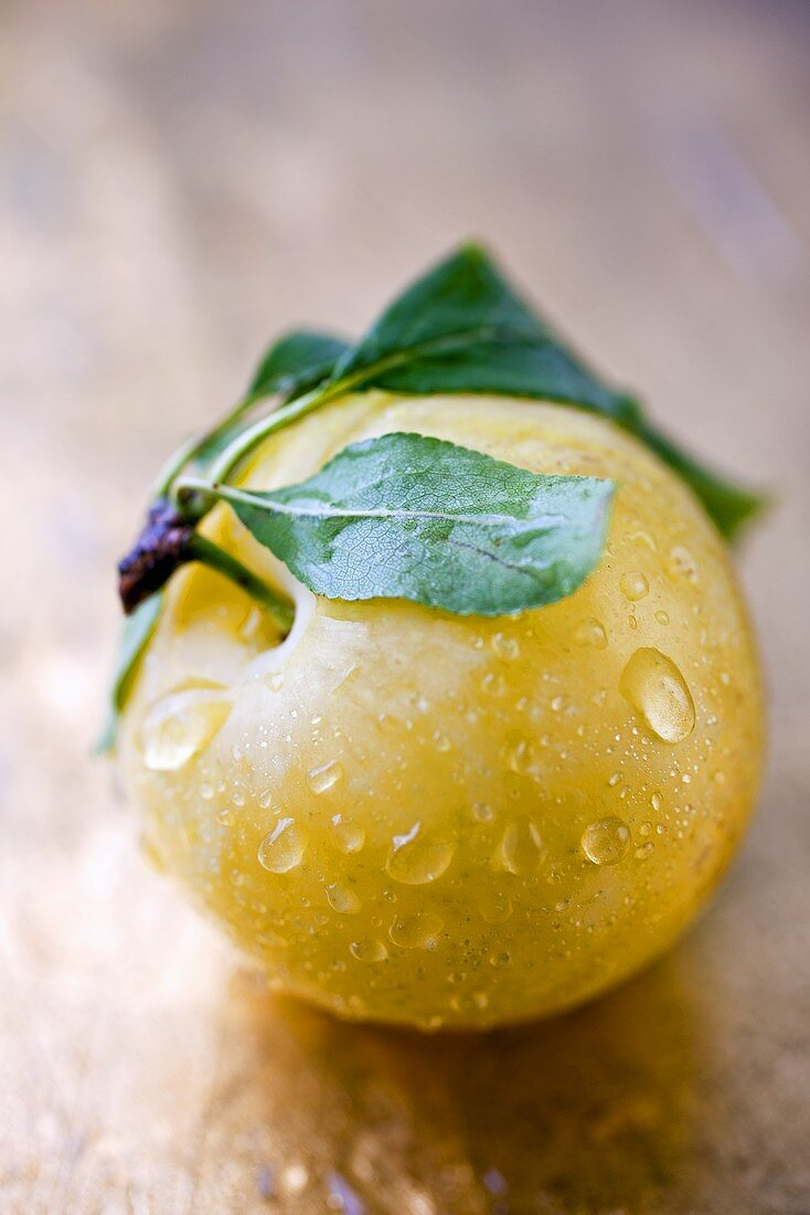 Wet Yellow Plum with Stem and Leaves