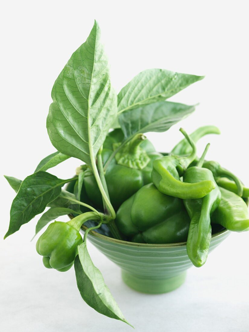 Organic Green Peppers with Branches