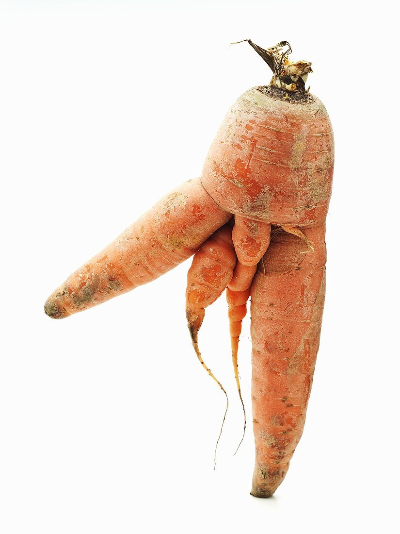 Farm Grown Carrot with Multiple Forks