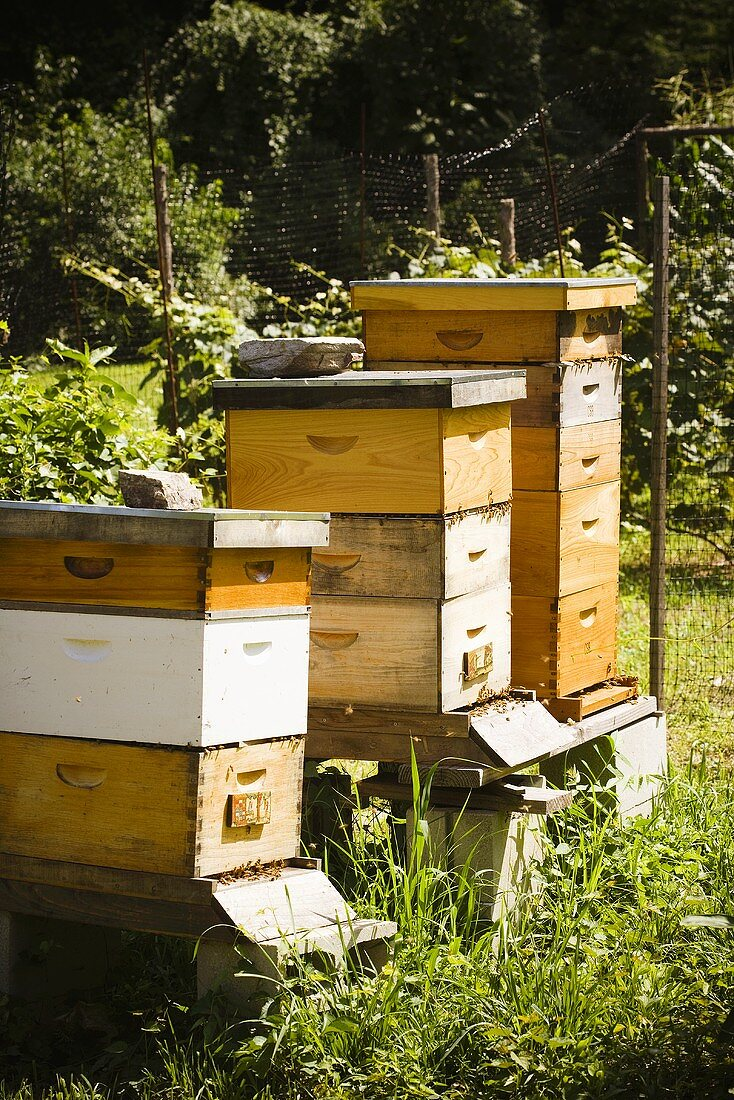 Bee Apiary (Bee Yard)