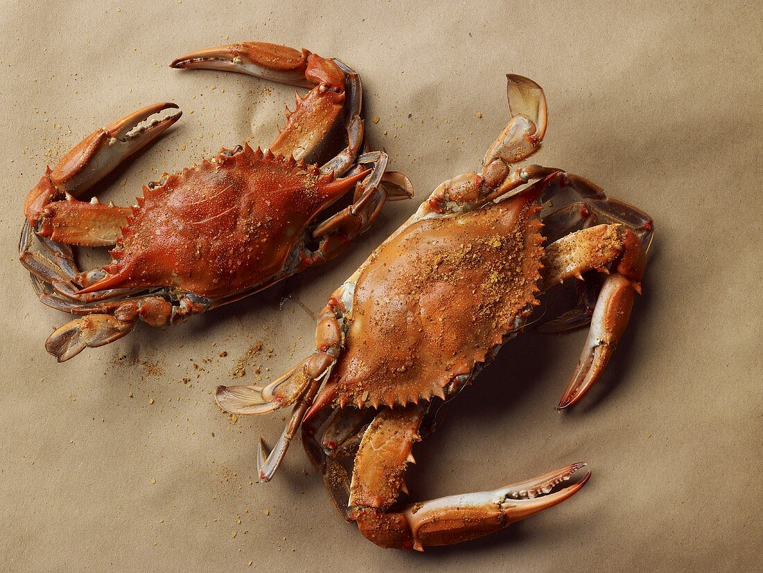 Two Steamed Maryland Blue Crabs