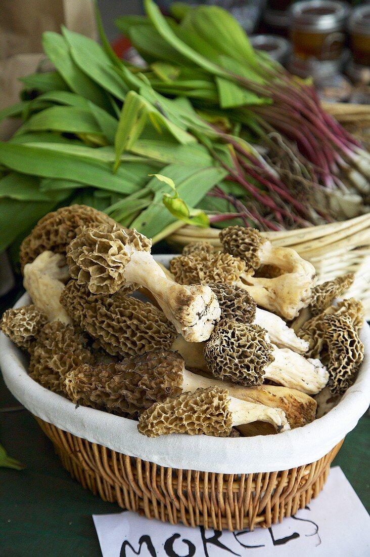 Wild Morel Mushrooms in a Basket at Farmer's Market