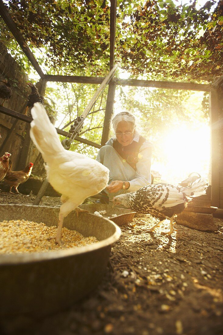 Older Woman with Chickens in Chicken Coop