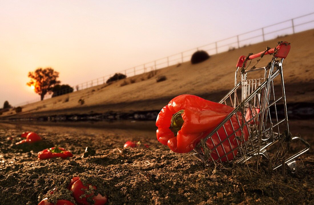 Red Bell Pepper in Shopping Cart in the Dirt