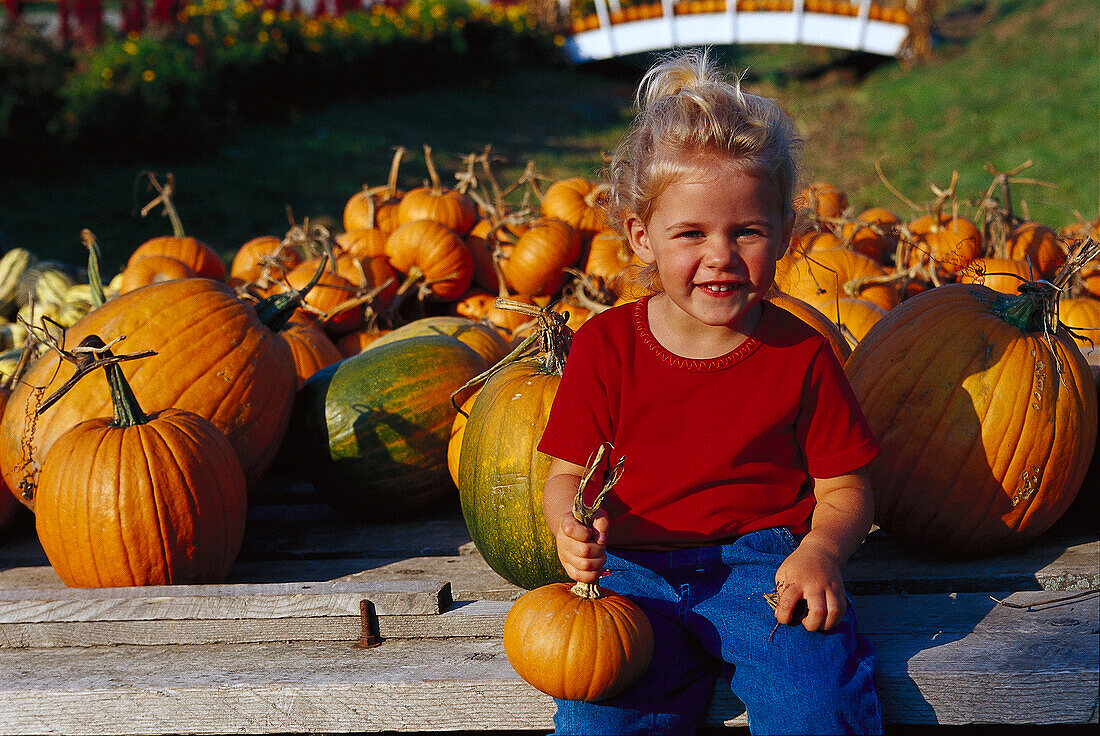 Pumpkin sale, little girl sitting in front of pumpkins in the sunlight, New England, USA, America