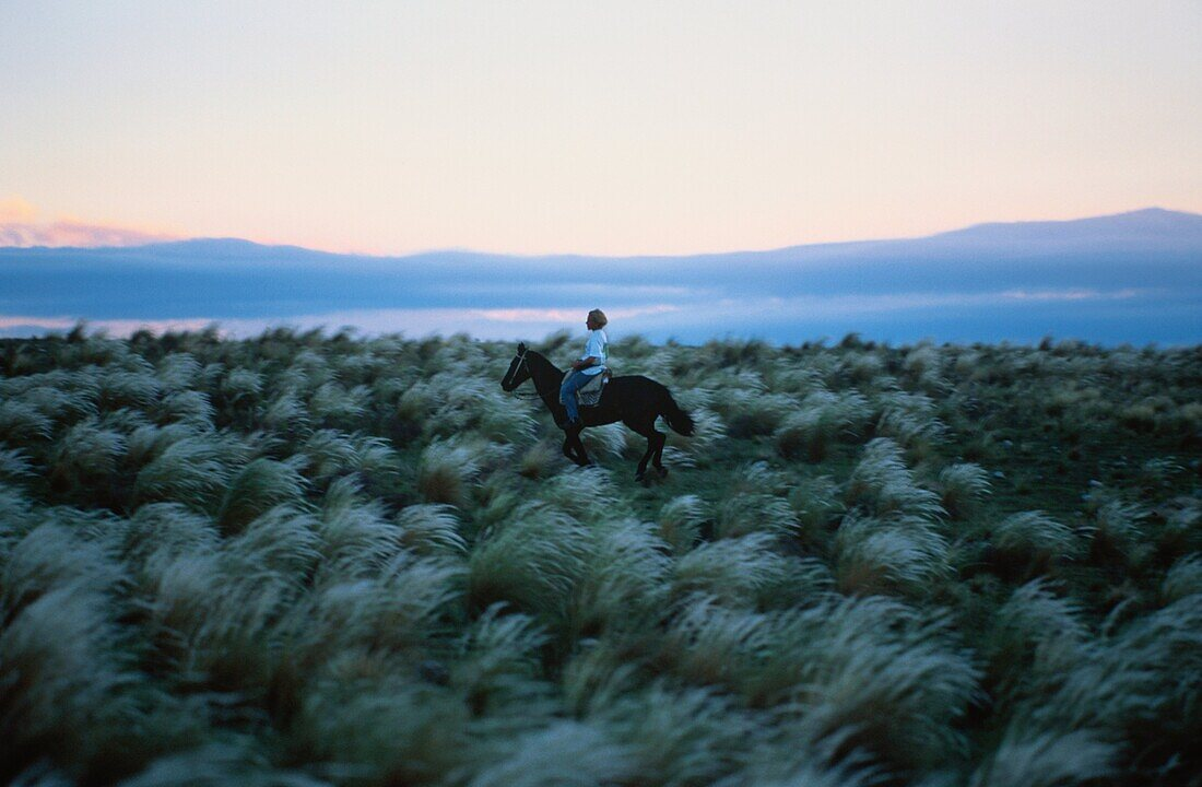 Rider in the steppe