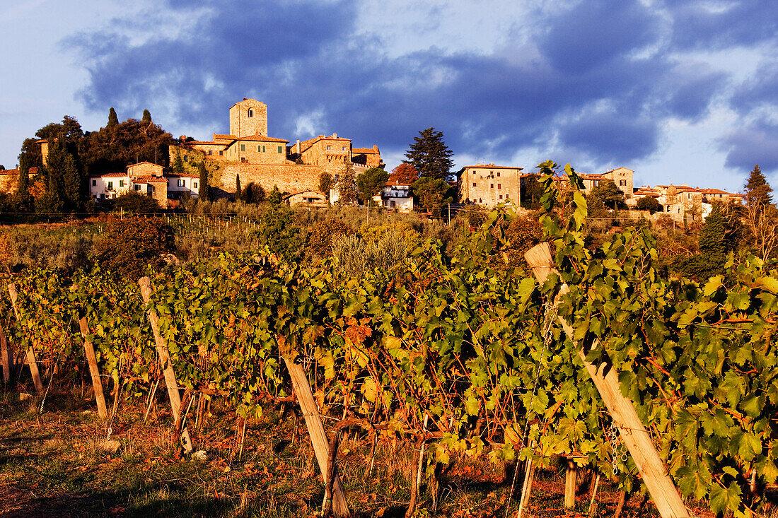 Vineyards, Panzano in Chianti, Tuscany, Italy