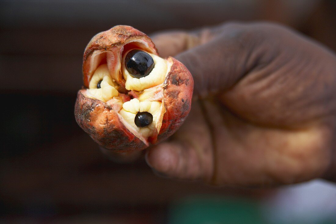 Hand Holding a Jamaican Ackee Fruit