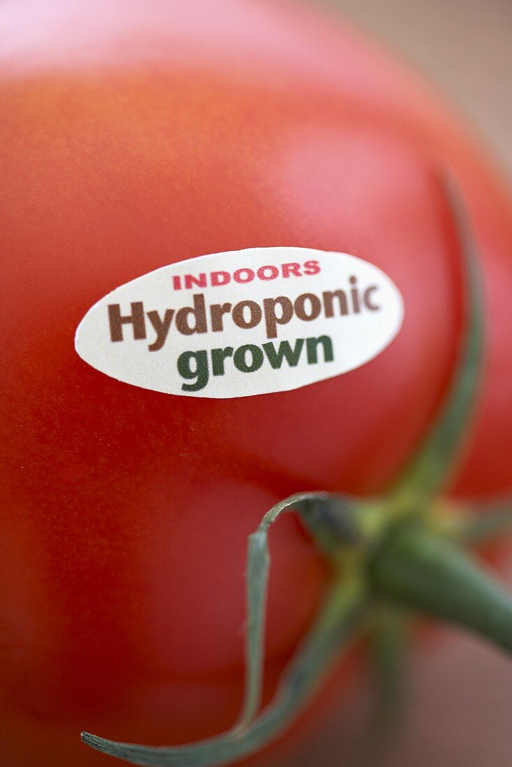 Tomato with Indoor Hydroponic Grown Sticker; Close Up
