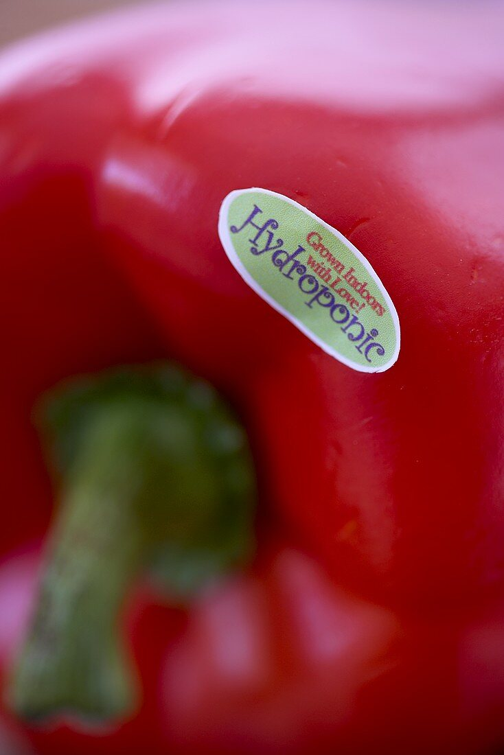 Hydroponic Grown Sticker on a Red Bell Pepper; Close Up