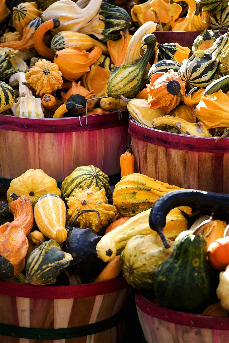 Large Variety of Gourds in Baskets