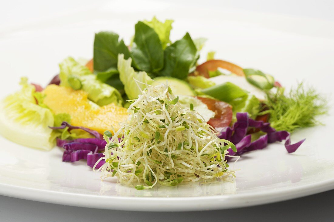 Alfalfa Sprouts with Salad