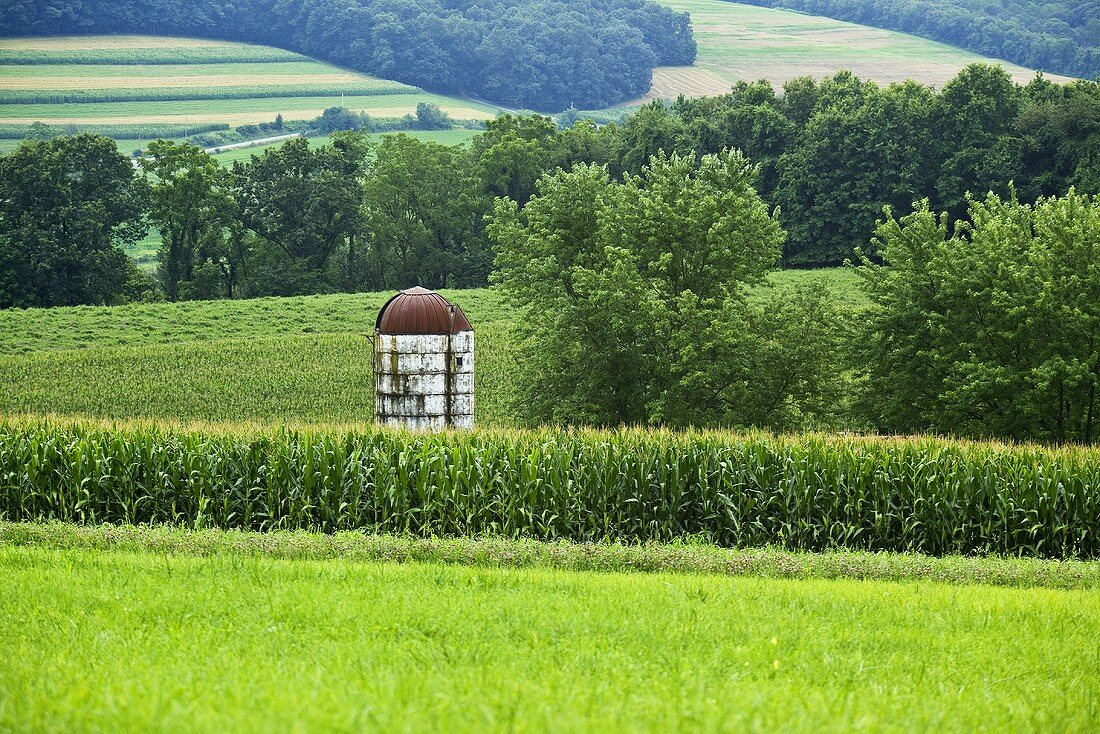Silo in Corn Field in Pennsylvania