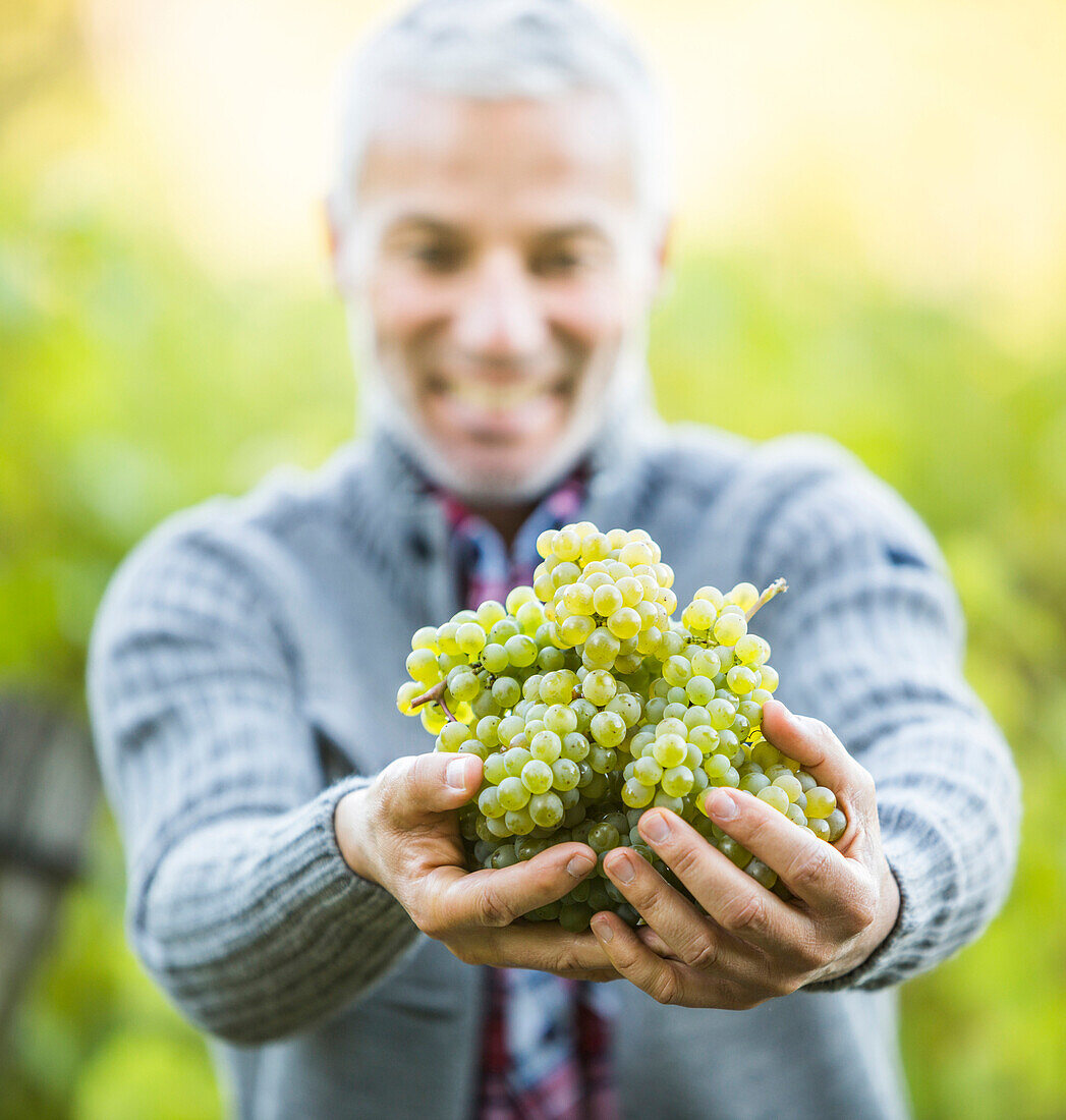 Caucasian farmer holding grapes in vineyard