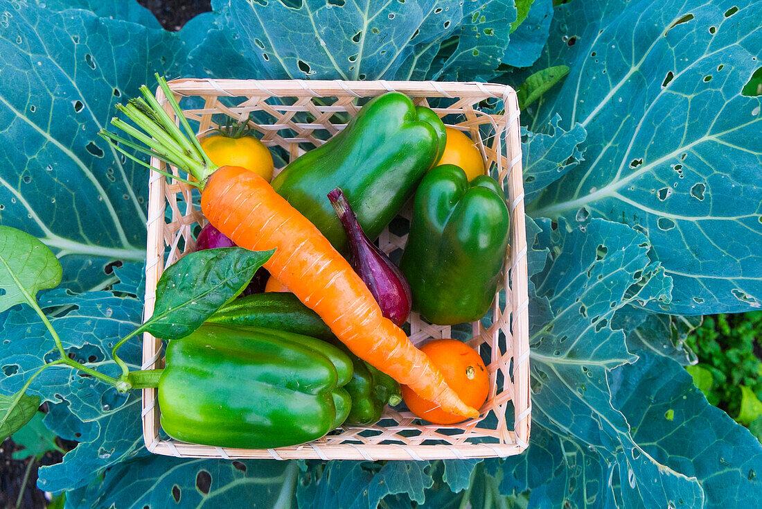 Close up of basket of fresh vegetables on leaves