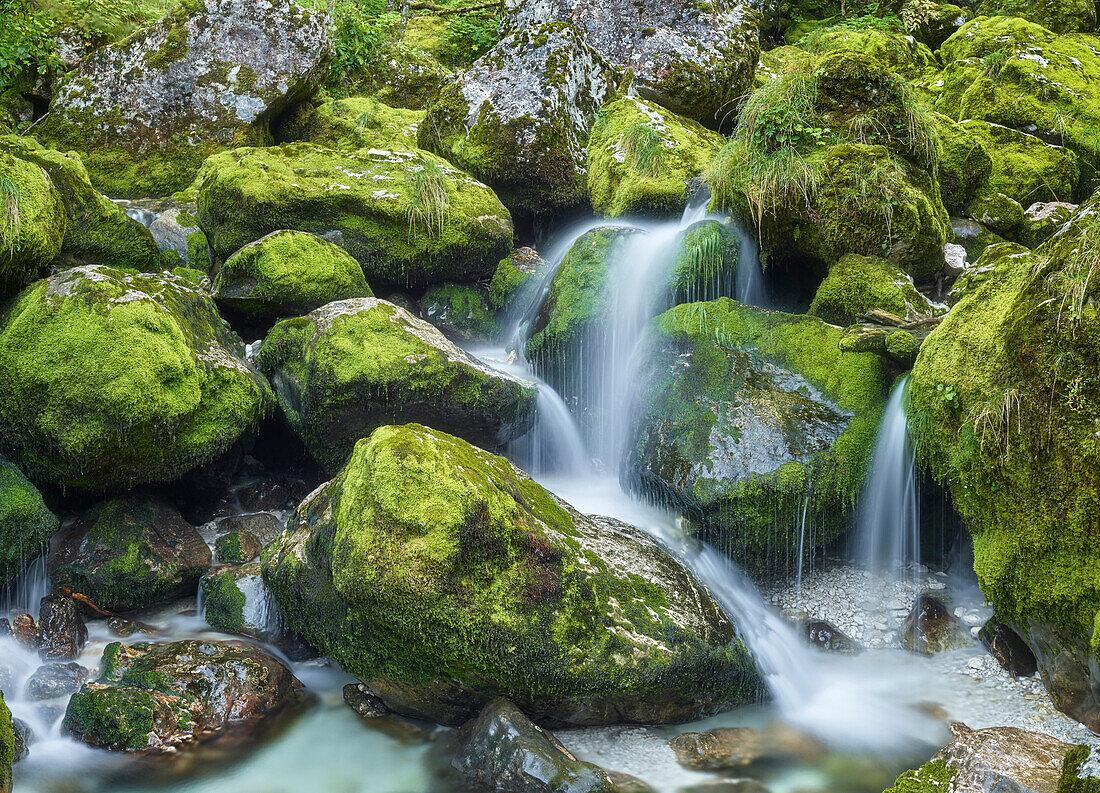 Lepe Jica, lepena valley, Triglav National Park, Slovenia