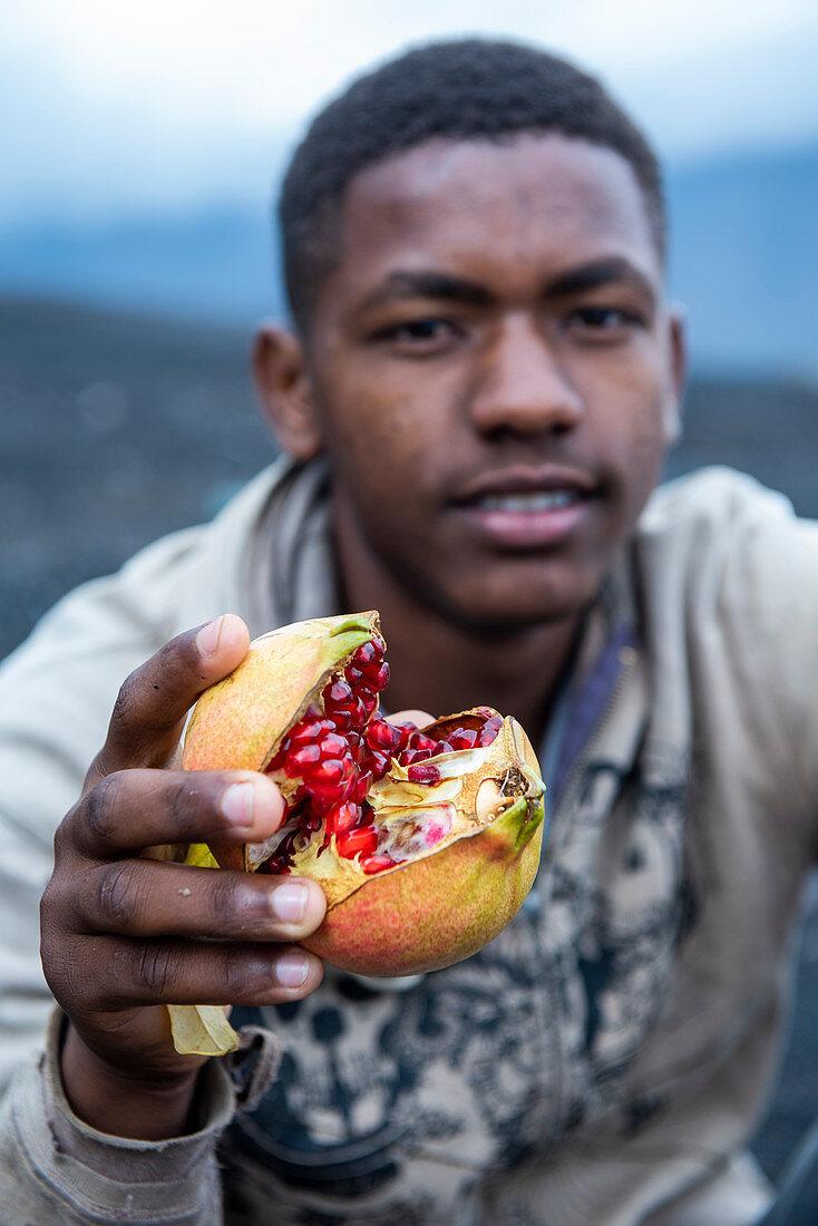 Landwirtschaft in den Lavafeldern der Insel Fogo, Nähe Dorf Cha im Nationalpark Fogo, Kap Verde
