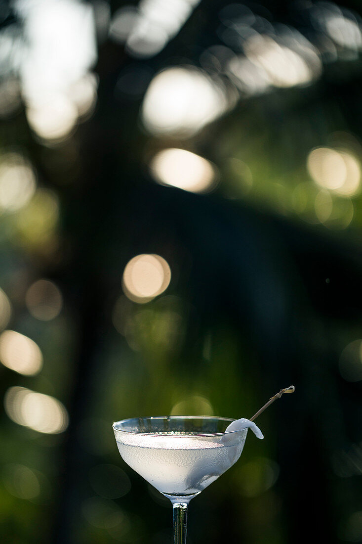 Close up of glass of coconut martini.