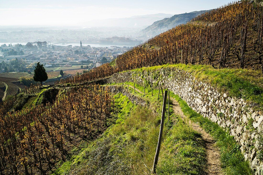 France, Drome, Tain l'Hermitage, Rhone valley, seen on Tain and Tournon since the hill and the vineyard of Hermitage