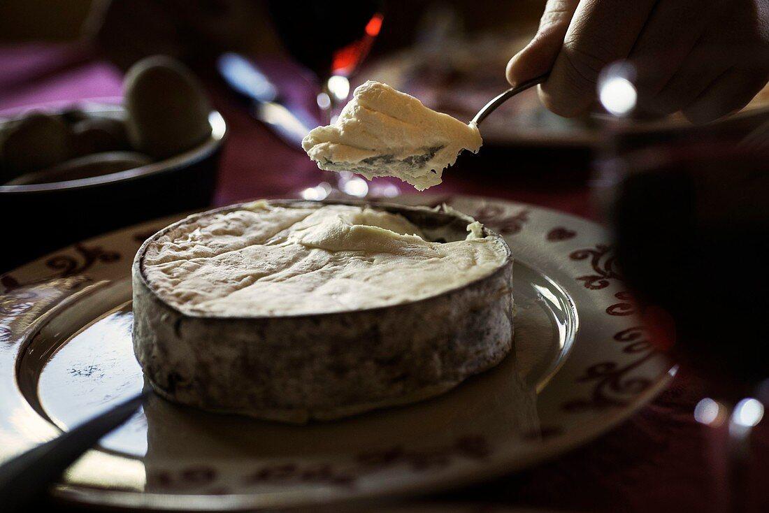 France, Haute Savoie, Abondance valley, Chatel, tasting of the Abondance vacherin cheese