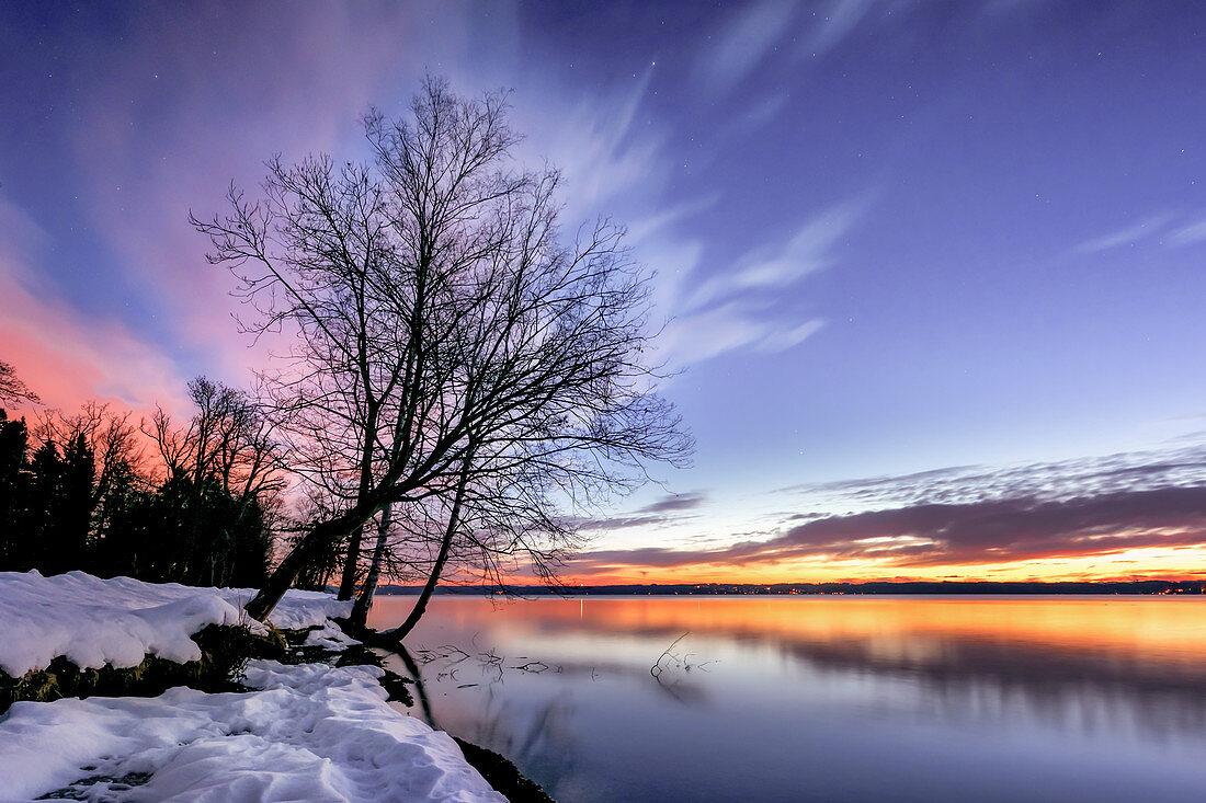 Kahler Baum an einem Wintermorgen bei Sonnenaufgang am Starnberger See, Tutzing, Bayern, Deutschland