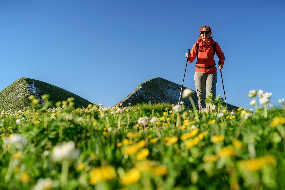 Frau beim Wandern, Blumenwiese unscharf im Vordergrund, Belluneser Dolomiten, Venezien, Venetien, Italien