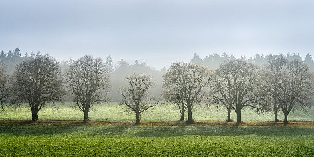 Allee kahler Bäume im Herbst, Ilkahöhe, Tutzing, Bayern, Deutschland