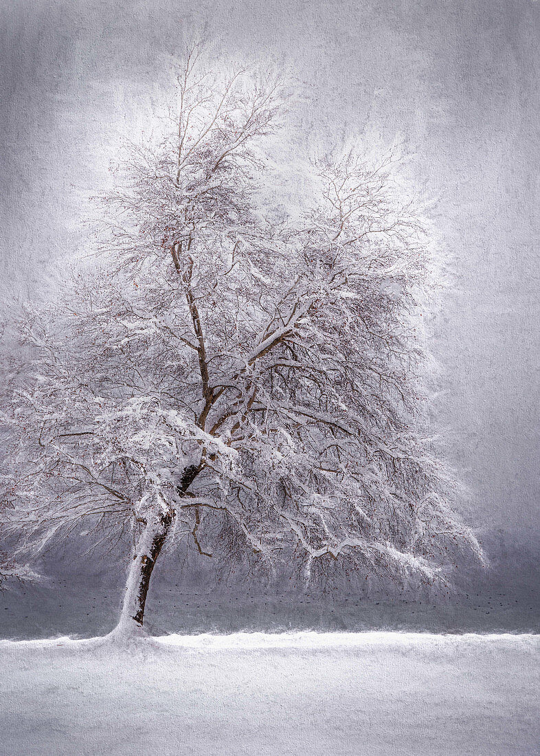 Bare snow-covered tree in front of Lake Starnberg, Tutzing, Bavaria, Germany