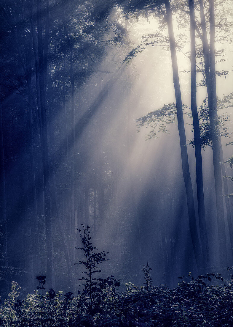 Sun in the light in the forest, Jakobsleiter, landscape, Bavaria, Germany