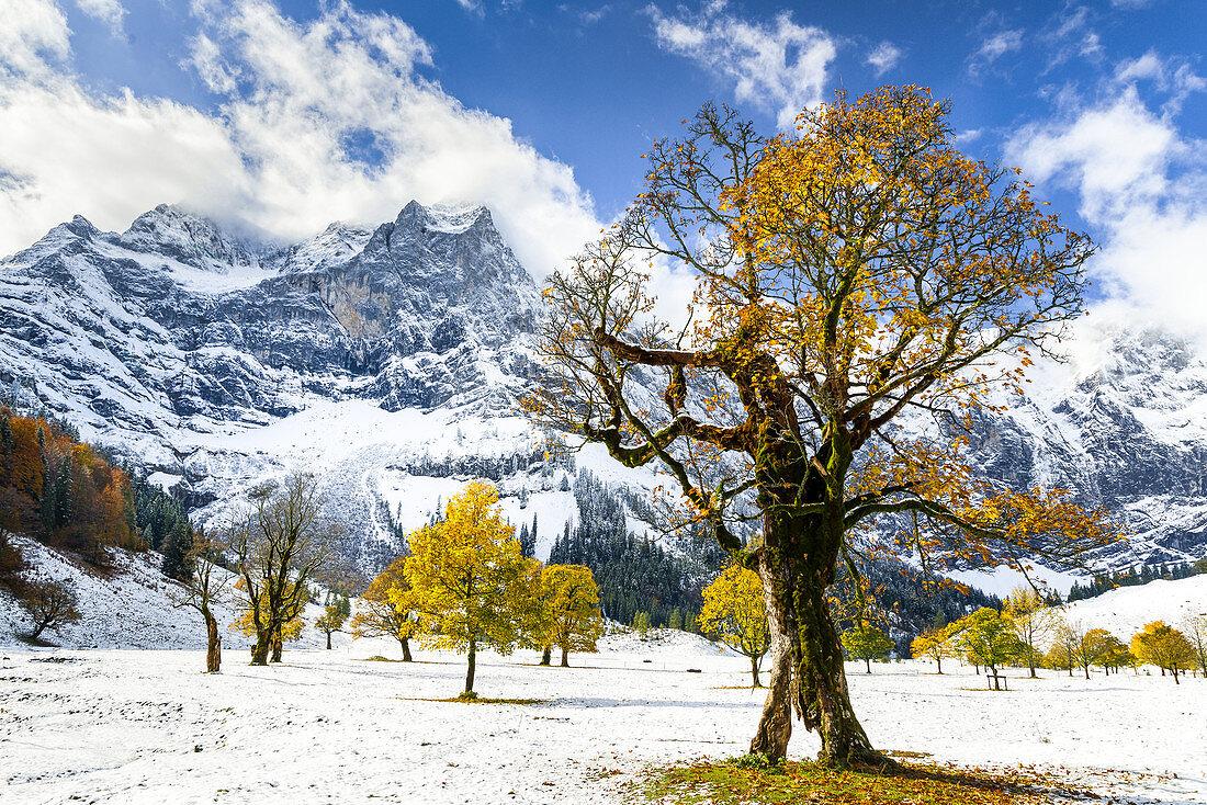 Autumn colors in the Ahornboden, Eng, Bavaria, Karwendel