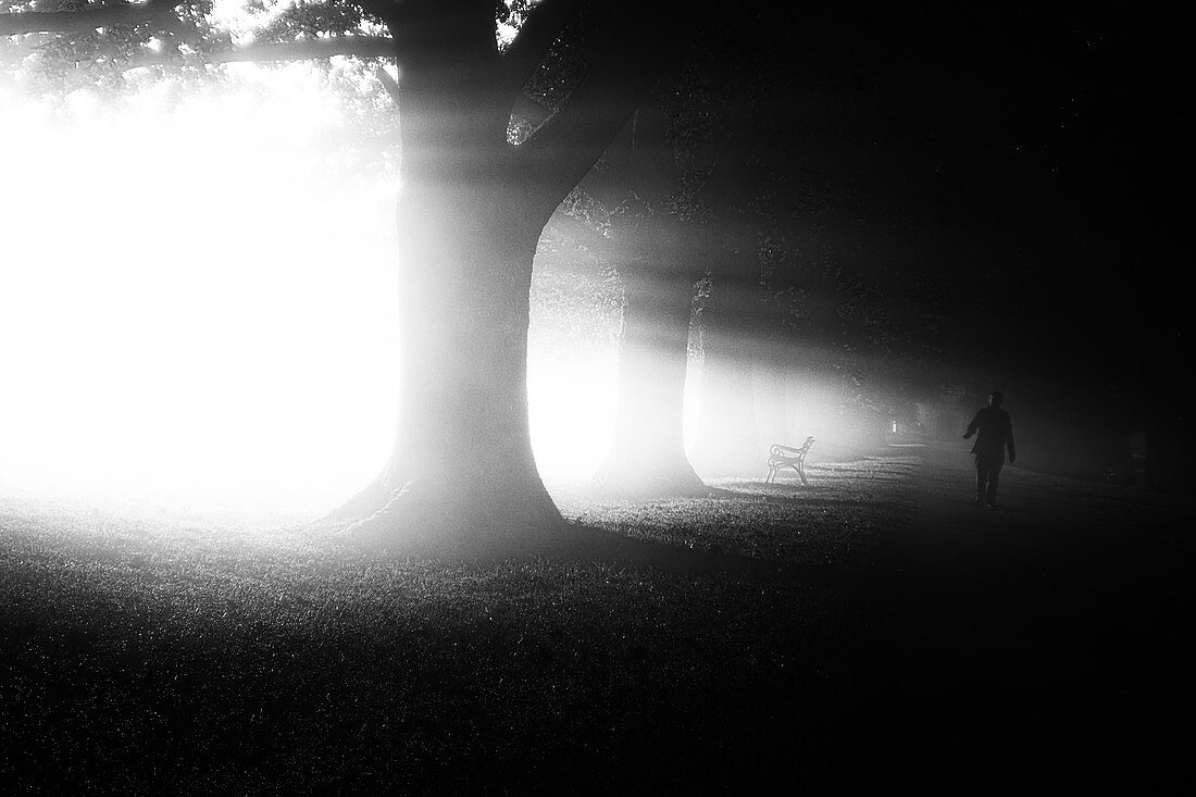 Lonely person on a morning walk in the fog at sunrise, Höhenried Clinic, Bernried, Bavaria, Germany