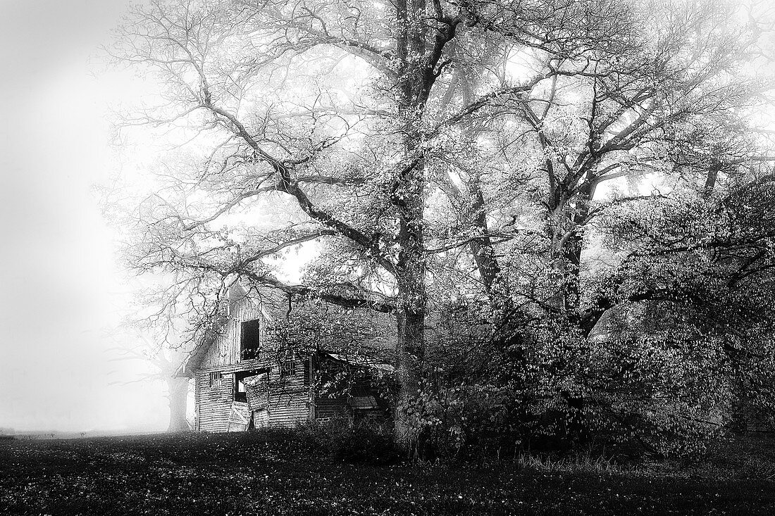 Scheune im Nebel mit großem Baum, Bernried, Bayern, Deutschland