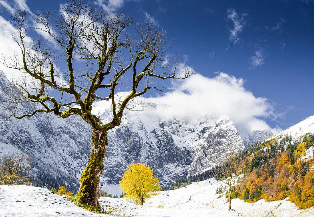 Herbstfärbung im Ahornboden, Eng, Bayern, Karwendel
