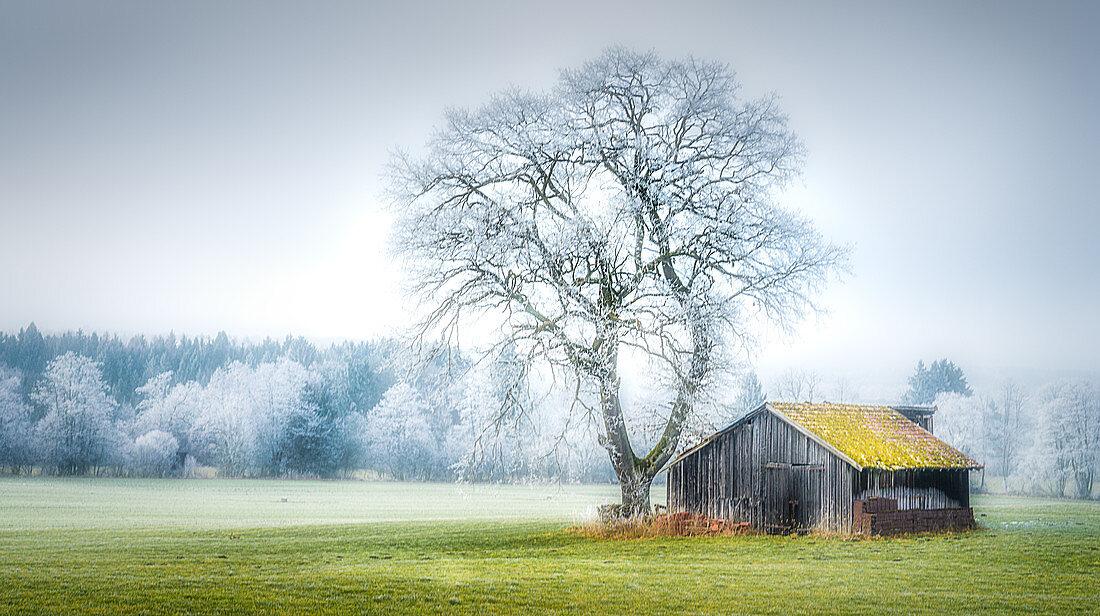 Barn in winter landscape with tree, Bernried, BAyern, Germany