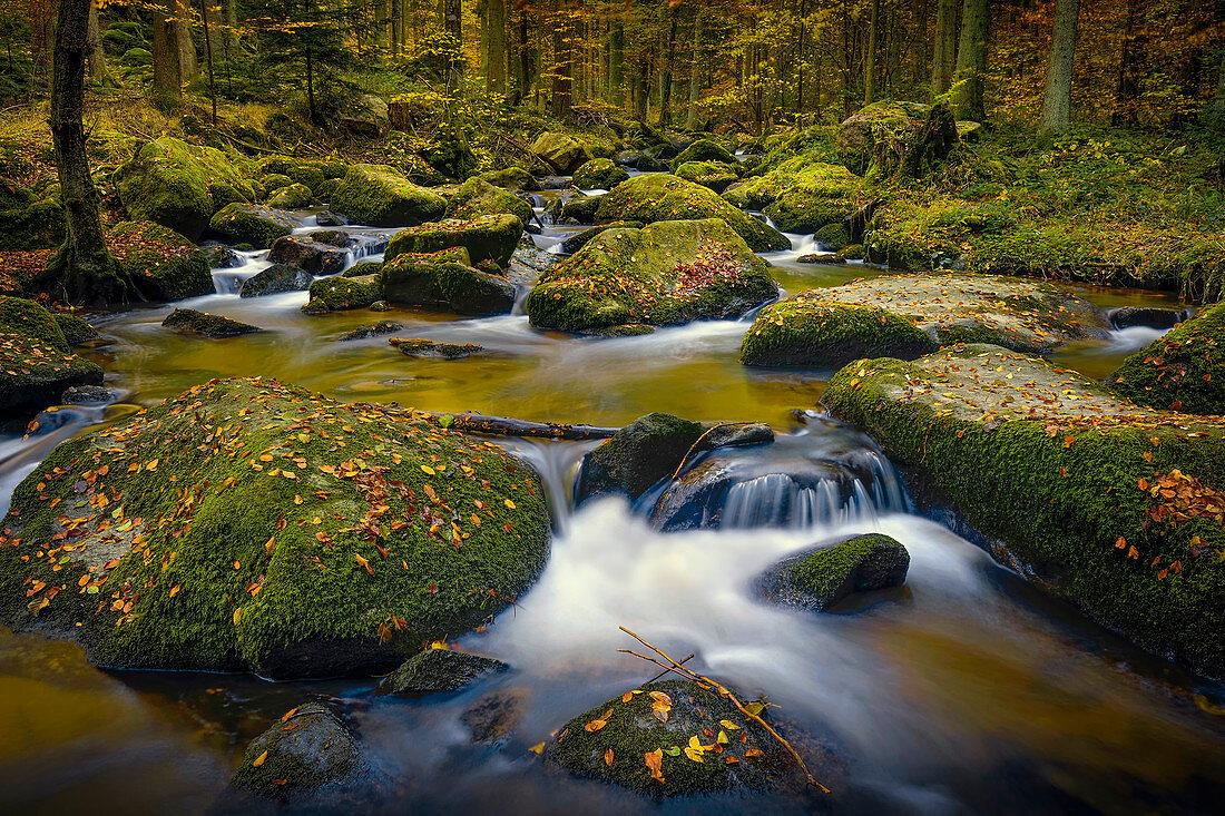 Herbst am Otterbach, Altenthann, Bayern, Deutschland