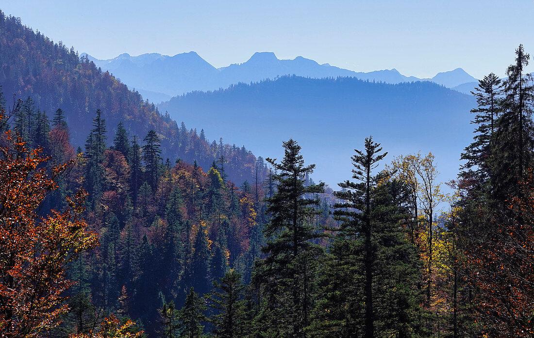Herbst im Bergwald oberhalb der Jachenau, Oberbayern, Bayern, Deutschland