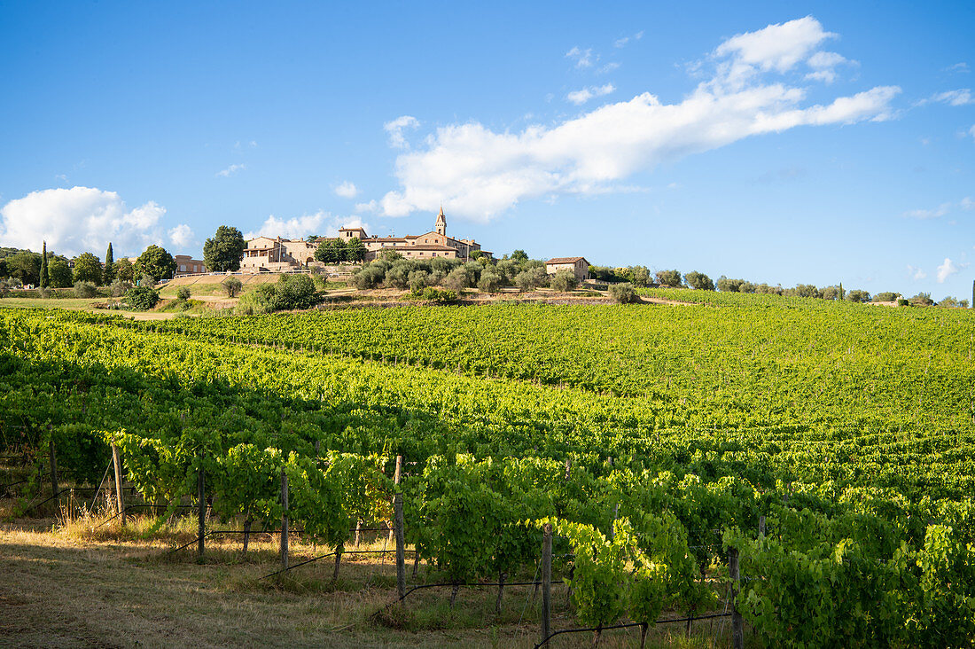 Blick auf San Gusmé, Siena, Weinberge in der Toskana, Italien