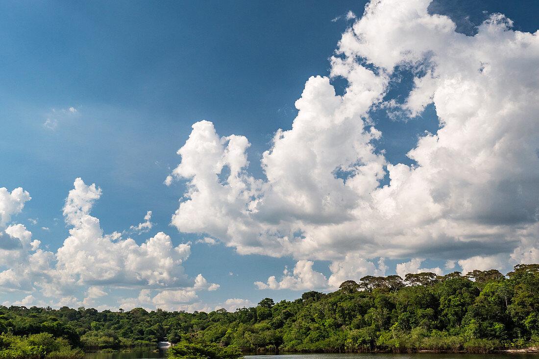 Cumuluswolken über dem Regenwald am Amazonas bei Manaus, Amazonasbecken, Brasilien, Südamerika