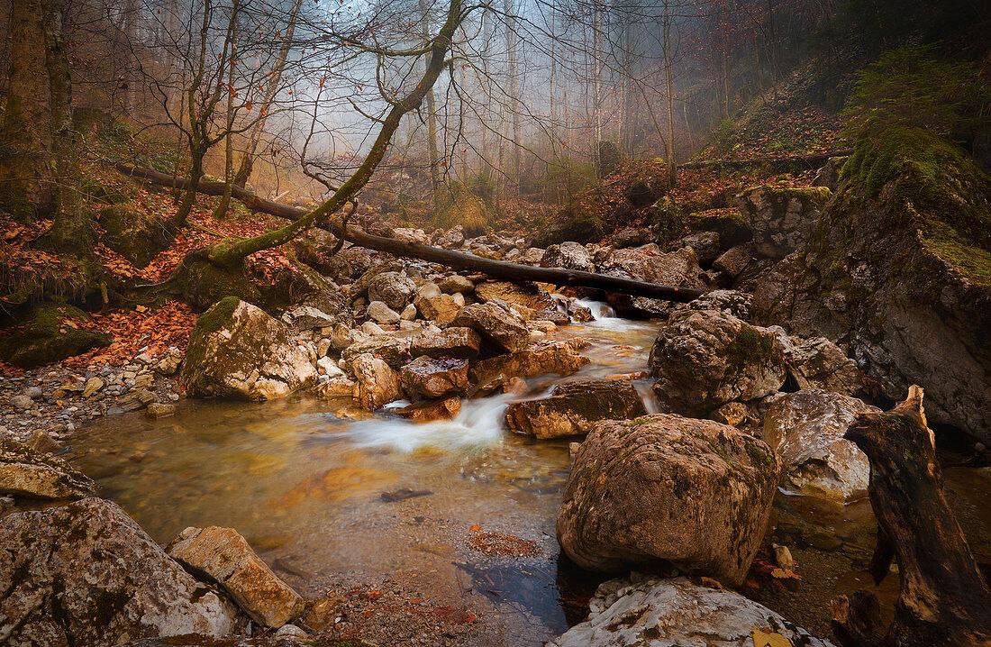 Vorfrühling am Lainbach, Kochel am See, Oberbayern, Bayern, Deutschland