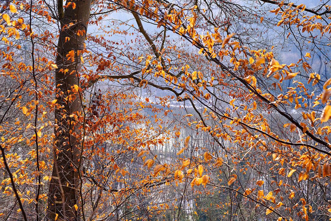 Sonniger Januarmorgen oberhalb der Isar bei Baierbrunn, Oberbayern, Bayern, Deutschland